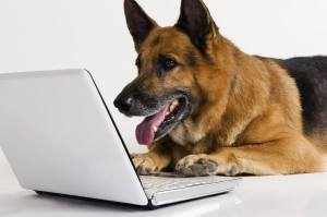 Dog reading email